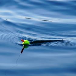 Fishin for Leaps 2019