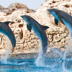 Fiesta at the Texas State Aquarium